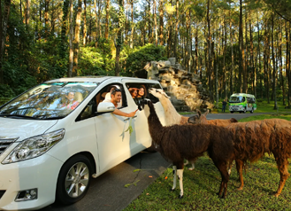 Taman Safari Prigen outdoor view