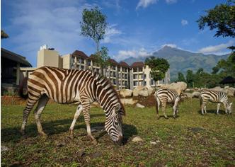 Baobab Safari Resort outdoor view with zebras