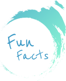 Fun Facts in Pico Sans Hotel